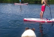 SUP na rijeci Gacki - a Lassie promatra