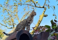Newton, jabuka i - mačka