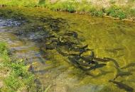 Na redu i akvakultura