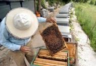 Početak izobrazbe za zvanje pčelar/ka