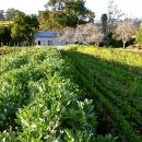 Najavljen natječaj za mjeru 6.3.1. - potpora razvoju malih poljoprivrednih gospodarstava