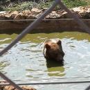 Eh, kako li je lijepo biti - medvjed