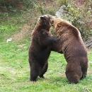 Medvjedići i sve oko njih