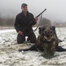 Tri dana lova na divlje svinje i tri zlata