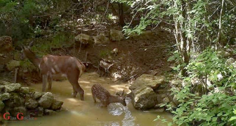 Lokve na Velebitu, spas za brojne životinje