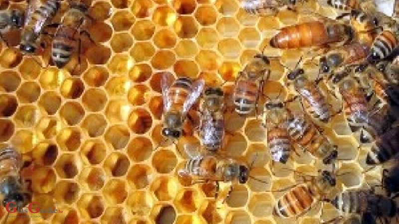 Donesen Nacionalni pčelarski program od 2020. do 2022.