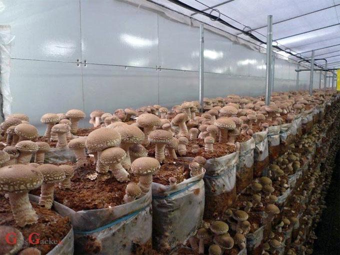 Objavljeni novi natječaji za Mjeru 21 za MSP-ove i poljoprivrednike vrijedni 200 milijuna kuna