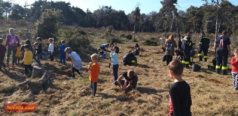 """U inicijativi """"Zasadi drvo ne budi panj!"""" danas je posađeno oko 130 sadnica crnog bora na Zrću"""