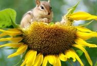Poljoprivrednik za 10 - očuvanje bioraznolikosti