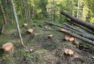 Bit će drva