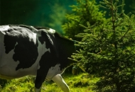 Javni poziv za prikupljanje ponuda za davanje u zakup šumskog zemljišta u vlasništvu RH