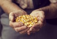 Poljoprivrednici: Oduzimaju nam pravo na vlastito uzgajanje sjemena