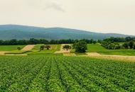Država najavljuje promjenu u politici poticanja u poljoprivrednoj proizvodnji