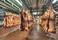 Uspješno provedena mjera klanja tovne junadi, svinja i janjadi kao posljedice koroavirusa