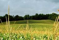 Hrvatskoj prenamjena dodatnih 120 milijuna kuna za poljoprivredu
