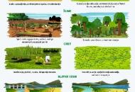 Svjetski dan zaštite okoliša