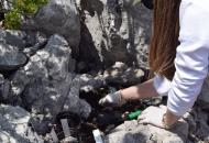 Donacija sadnica degenije Velebitskomu botaničkom vrtu