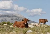 Ministarstvo poljoprivrede zatražilo EU nastavak pomoći poljoprivrednicima u koronakrizi