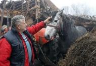 Poljoprivrednim gospodarstvima na potresom pogođenim područjima pružit će se financijska pomoć
