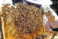 Pčelarima isplaćeno 14,8 milijuna kuna