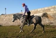 Ana Jergović, lička šaptačica konjima