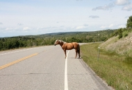 Automobilom udario konja na cesti