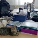 Antistresne mačke