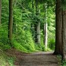 Financiranje gospodarenja privatnim šumama