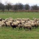 Lokalna poljoprivredna zadruga Lika COOP u punom zamahu