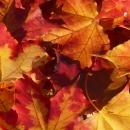 Jesen u Gračacu - 28. rujna