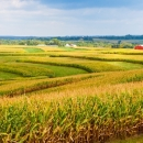 "Naša poljoprivreda ""gori gre"""