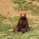 Doista, vjerujte mi na medvjeđu, jedno strašno i depresivno vrijeme
