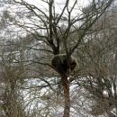 Da ne može na stablo!?