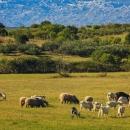 146 milijuna kuna za osiguranje usjeva, životinja i biljaka