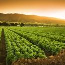 Izmjene natječaja za obnovu poljoprivrednog zemljišta