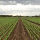 Od danas potpora za ekološku proizvodnju - 250 milijuna kuna