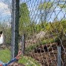 Turističke grupe vole svibanj u Gackoj