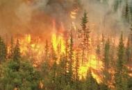 Jačanje kapaciteta zaštite od šumskih požara