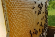 Potpore pčelarima