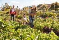 Izrada plana razvoja ekološke poljoprivrede