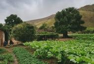 Novi natječaji za male i mlade poljoprivrednike iz programa ruralnog razvoja