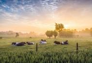 U saborsku proceduru upućena nova Strategija poljoprivrede te prijedlozi novih Zakona o poljoprivrednom zemljištu i o održivoj uporabi pesticida