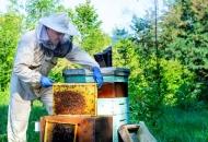 Predavanje za pčelare - Američka gnjiloća i ostale bolesti pčela