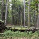 Svjetski je dan prašuma